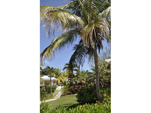 Coconut Bay - The tropical garden